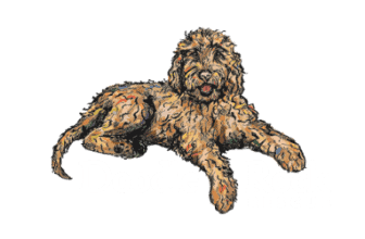 Doodle Rock Rescue – Dallas Tx Doodle Rescue